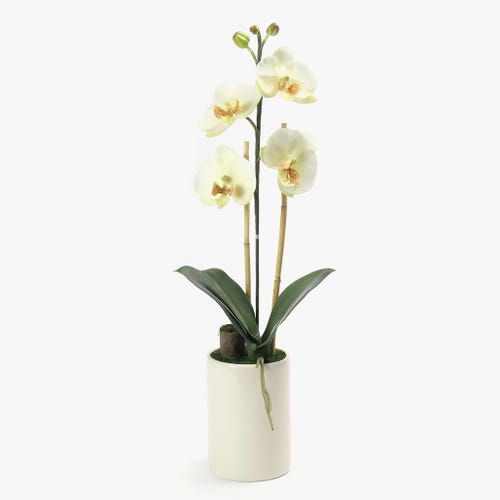 Orquídea Branca 66x25 cm