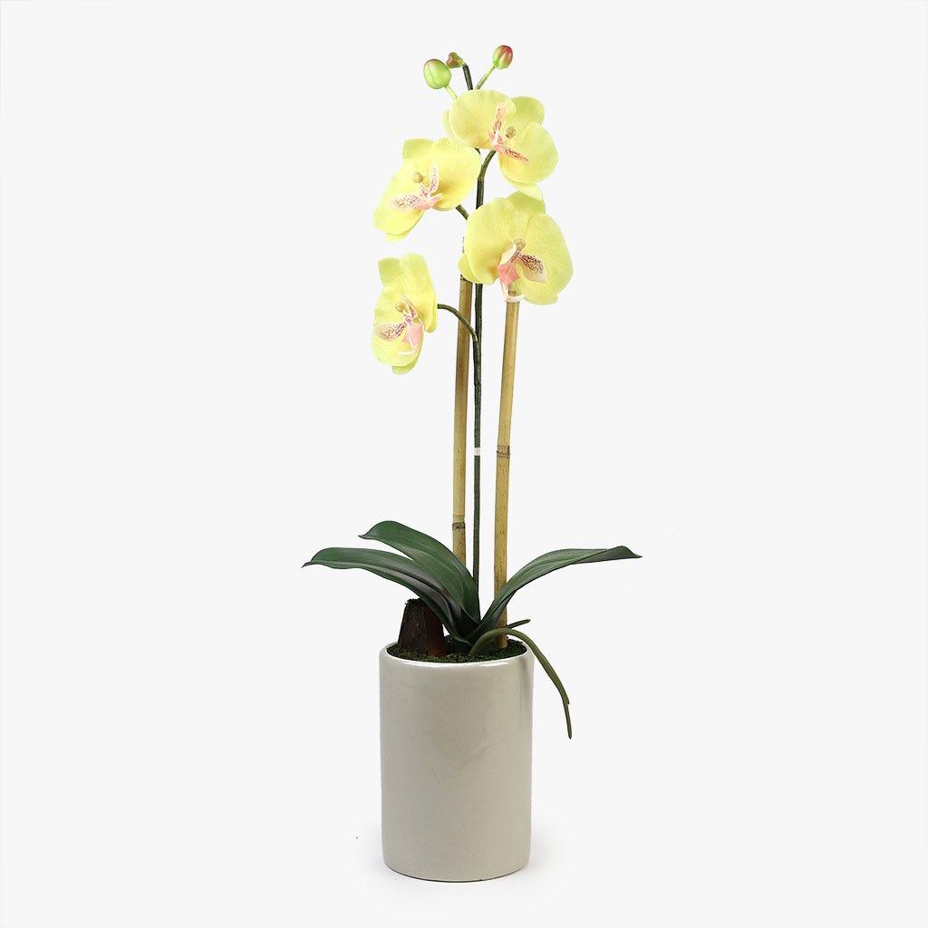 Orquídea Amarela 66x25 cm